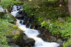 Stream in the woods. Small waterfall in a mountain stream Stock Images