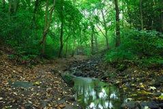Stream in the woods stock photos