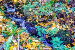Stream in the Woods royalty free stock photography