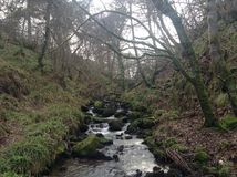 Stream in woods. Stock Photography