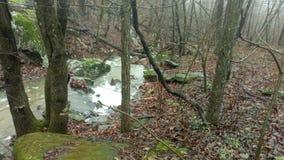 Misty woods royalty free stock photos