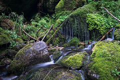 Stream in the woods. Long exposure of a stream in the woods in the middle of the moss stock photography
