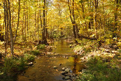 Stream in the woods Royalty Free Stock Images