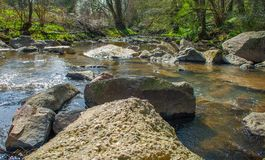 Creek and stones in wild nature. A stream in the woods with stones and trees within a wilde nature Royalty Free Stock Images