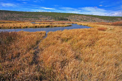 The stream and yellow autumn grass Stock Photography