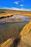 The stream and yellow grass in park Yellowstone. Plain, superficial stream and yellow autumn grass in park Yellowstone in the USA royalty free stock photography
