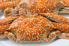 Streamed blue crabs ( sand crab ) Royalty Free Stock Images