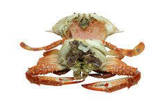 Streamed / boiled Flower crab / Blue crab / Blue swimmer crab / Blue manna crab / Sand crab / seafood Royalty Free Stock Photography
