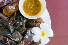 Streamed mussels with spicy sauce Stock Images