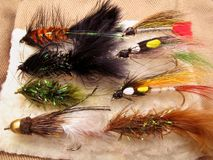 Streamer Fly Assortment. Photo of assortment of streamer flies for trout fishing Stock Photo