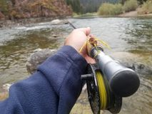Streamer fly fishing. Fly fishing with streamers in montana. Blackfoot river Royalty Free Stock Image