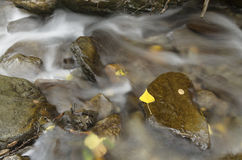 Streaming water between rocks with autumn leaves Stock Photos