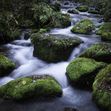 Streamlet在森林里 免版税库存照片