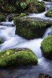 Streamlet在森林里 库存照片