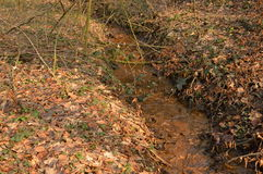 Streamlet в древесинах Стоковое фото RF