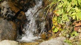 Streamlet, das hinunter einen Hügel bedeckt in den Anlagen, Kristalltrinkwasser, Wildnis läuft stock video