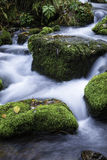 Streamlet in a forest Stock Photo