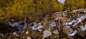 The Streamlet in  hill forest Royalty Free Stock Photography
