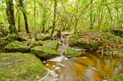 Streamlet Stock Photography