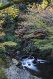 Streamlet with overflowing water from Minoh (Mino-o) waterfall Stock Photography