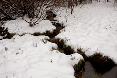 Streamlet in a winter wood Stock Images