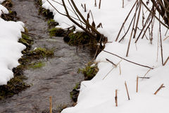 Streamlet in a winter wood Royalty Free Stock Photography