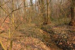 Streamlet in woods Stock Photo