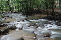 Streams. Beautiful mountain streams flowing into the forest Stock Photo