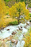 Streams. Valley stream flowing in the beautiful scenery Royalty Free Stock Photos