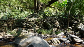Streams and banyan trees Royalty Free Stock Images