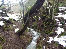 Streams in the countryside with river. And lush vegetation and snow begins to melt Stock Photo