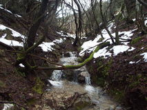 Streams in the countryside with river. And lush vegetation and snow begins to melt Royalty Free Stock Photography