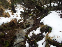Streams in the countryside with river. And lush vegetation and snow begins to melt Royalty Free Stock Photo