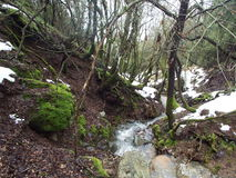 Streams in the countryside with river. And lush vegetation and snow begins to melt Stock Images
