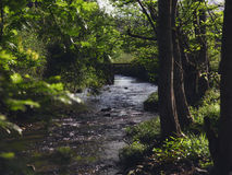 Streams cross the forest, a small stone bridge across the stream, the sun through the forest to the creek.  stock photos