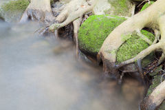 Streams flowing through the trees Stock Images