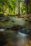 Streams in the forest Stock Image