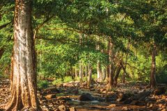 Streams in the forest Royalty Free Stock Photography