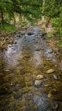Streams in the forest.  Stock Photography