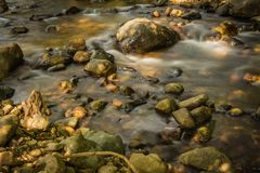Streams in the forest.  Stock Photo