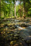 Streams in the forest.  Royalty Free Stock Photo