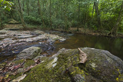 Streams in the forest. Streams in the rain forest with wide lens Royalty Free Stock Photo