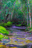 Streams in the forest Stock Photos