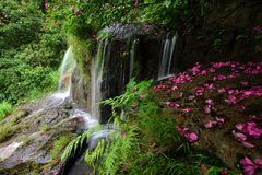 Streams in the forest. Spring in Shenzhen, China Stock Photos