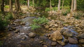 Streams in the forest.  Royalty Free Stock Photography
