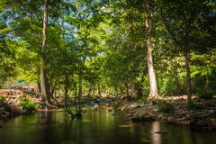 Streams in the forest.  Stock Image