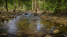 Streams in the forest.  Royalty Free Stock Photos