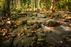 Streams in the forest.  Royalty Free Stock Image
