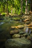 Streams in the forest.  Stock Images
