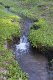 Streams in the grassland Royalty Free Stock Photo